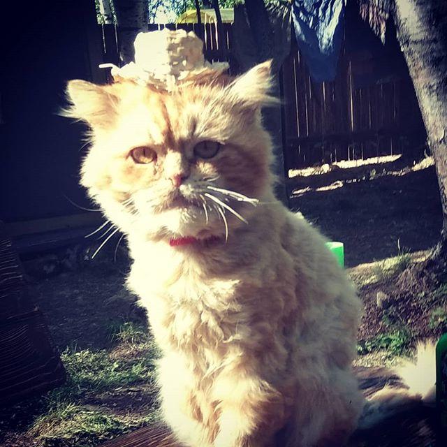 Наш Иннокентий приоделся к встречи туристов в нашем кузнечном парке. #кот #одежда #шляпа #турист #встреча #кузницауглебыча